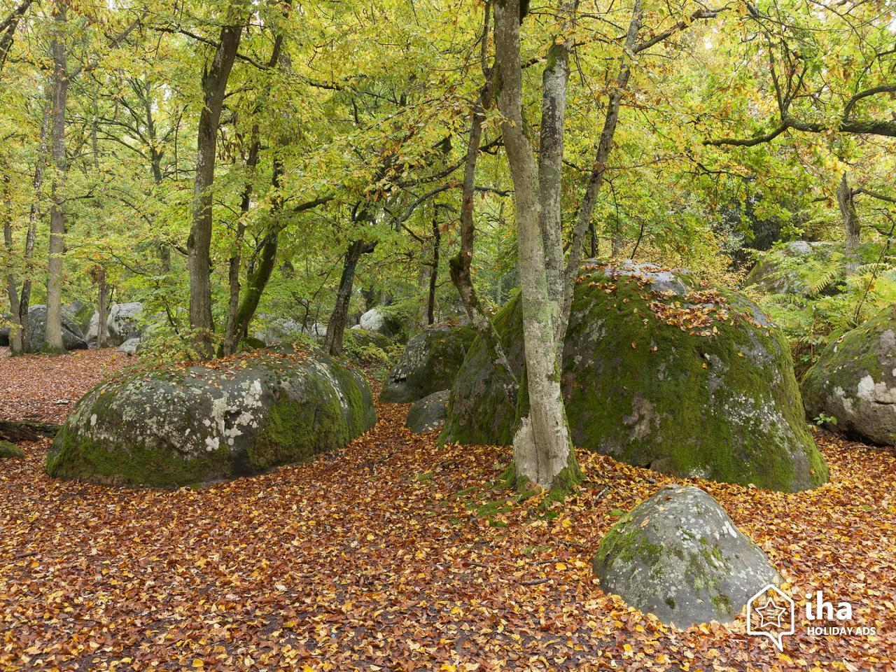 Fontainebleau-Les-forets-de-fontainebleau (1)